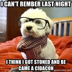hipster dog - i can't rember last night  i think i got stoned and be came a cidacon