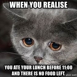 sad cat - When you realise You ate yOur lunch Before 11:00 and there is no food left.