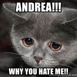sad cat - ANDREA!!! WHY YOU HATE ME!!