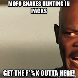 Snakes on a plane Samuel L Jackson - Mofo snakes hunting in packs Get the F*%K Outta here!