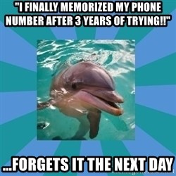 """Dyscalculic Dolphin - """"I finally memorized my phone number after 3 years of trying!!"""" ...forgets it the next day"""