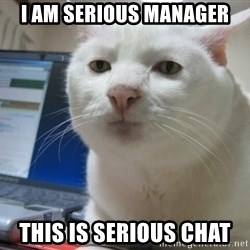 Serious Cat - I Am Serious manager This Is Serious chat