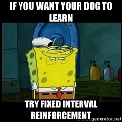 Don't you, Squidward? - IF YOU WANT YOUR DOG TO LEARN TRY FIXED INTERVAL REINFORCEMENT