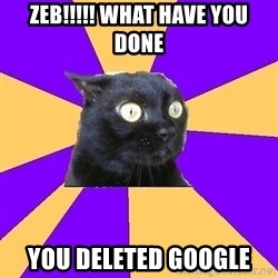 Anxiety Cat - Zeb!!!!! WHAT HAVE YOU DONE YOU DELETED GOOGLE