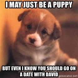 cute puppy - I may just be a puppy But even I know you should go on a date with David