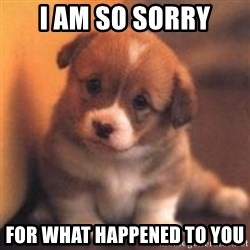 cute puppy - i am so sorry for what happened to you