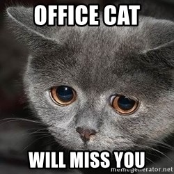 sad cat - office cat will miss you