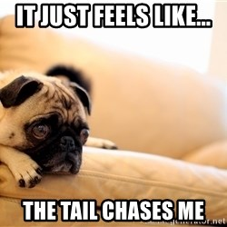 Sorrowful Pug - it just feels like... the tail chases me