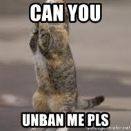 Begging Cat - Can you Unban me pls