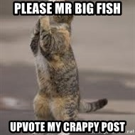 Begging Cat - please mr big fish upvote my crappy post
