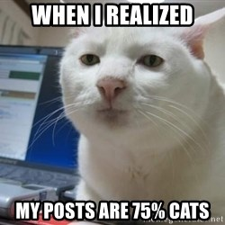 Serious Cat - WHEN I REALIZED MY POSTS ARE 75% CATS