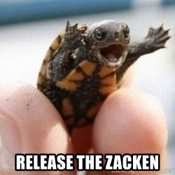 angry turtle -  Release the zacken