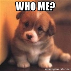 cute puppy - who me?