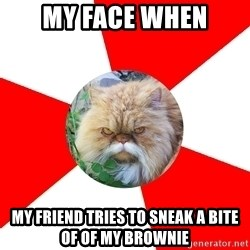 Diabetic Cat - my face when my friend tries to sneak a bite of of my brownie