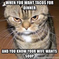 angry cat 2 - When you want tacos for dinner And you know your wife wants soup
