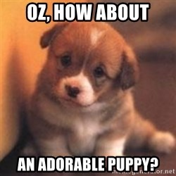 cute puppy - Oz, how about An adorable puppy?
