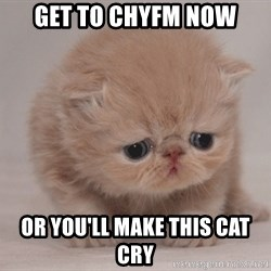 Super Sad Cat - Get to CHYFM NOW Or you'll make this cat cry