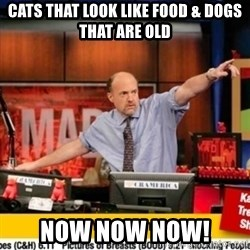 Karma Cramer - Cats that look like food & DOGS THAT ARE OLD now now now!