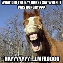 Horse - What did the gay horse say when it was hungry???  HAYYYYYYY.....LMFAOOOO