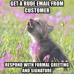 Baby Insanity Wolf - Get a rude email from customer Respond with formal greeting and SIGNATURE