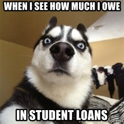 Surprised Husky - When i see how much i owe in student loans