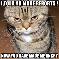 angry cat 2 - I told no more reports !   Now you have made me angry