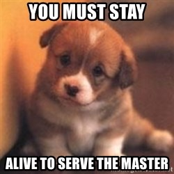 cute puppy - You must Stay Alive to serve the master