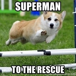 Ridiculously Photogenic Corgi  - superman  to the rescue