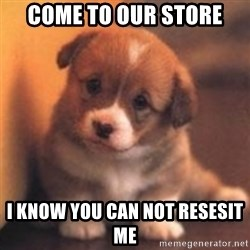 cute puppy - come to our store i know you can not resesit me