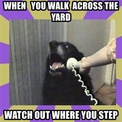 Yes, this is dog! - when   you walk  across the yard watch out where you step