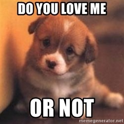 cute puppy - do you love me or not