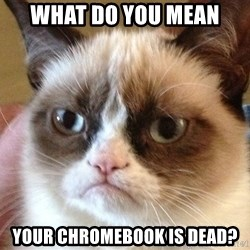 Angry Cat Meme - What do you mean YOUR CHROMEBOOK IS DEAD?