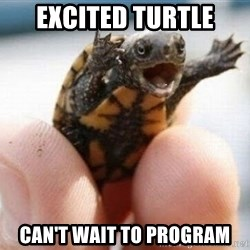 angry turtle - EXCITED TURTLE CAN'T WAIT TO PROGRAM