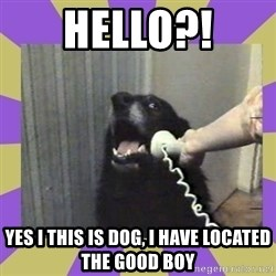 Yes, this is dog! - HellO?! Yes I this is dog, I have located the good boy
