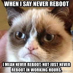 Angry Cat Meme - When I say Never Reboot I mean never reboot. Not just Never Reboot in working hours.