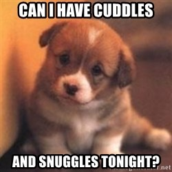 cute puppy - Can i have cuddles And snuggles tonight?