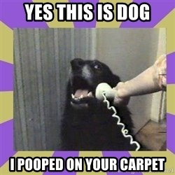 Yes, this is dog! - Yes this is doG I pooped on your carpet