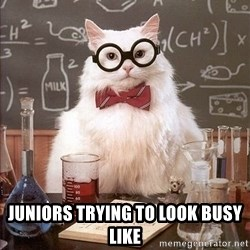 Chemistry Cat -  juniors trying to look busy like