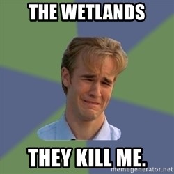 Sad Face Guy - The wetlands They kill me.