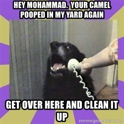 Yes, this is dog! - hey mohammad.  your camel  pooped in my yard again get over here and clean it up