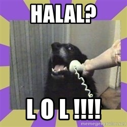 Yes, this is dog! - halal? l o l !!!!