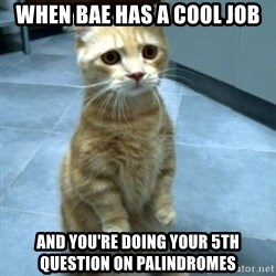 Sadcat - When Bae has a cool job and you're doing your 5th question on palindromes