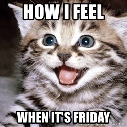 HAPPY KITTEN - How I feel  when it's friday