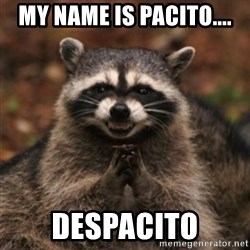 evil raccoon - My name is pacito.... despacito