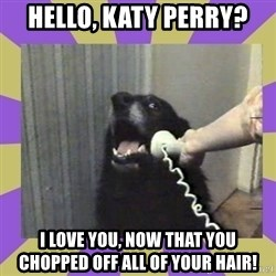 Yes, this is dog! - Hello, Katy Perry? I love you, now that you chopped off all of your hair!