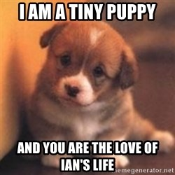 cute puppy - I am a tiny puppy And you are the Love of Ian's life