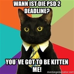 Business Cat - wann ist die PSD 2 deadline? you`ve got to be kitten me!
