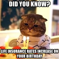 Birthday Cat - Did you know? Life Insurance rates increase on your birthday