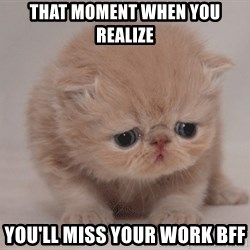 Super Sad Cat - That moment when you realize You'll miss your work BFF