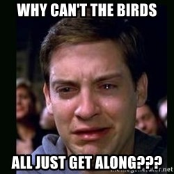 crying peter parker - Why can't the birds All just get along???